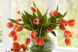 Gần Tết, chị em đi chợ mua hoa cẩn thận 6 loại hoa đẹp nhưng chứa chất độc nguy hiểm