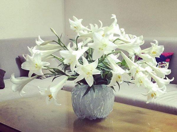 Gần Tết, chị em đi chợ mua hoa cẩn thận 6 loại hoa đẹp nhưng chứa chất độc nguy hiểm-1