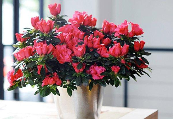 Gần Tết, chị em đi chợ mua hoa cẩn thận 6 loại hoa đẹp nhưng chứa chất độc nguy hiểm-2