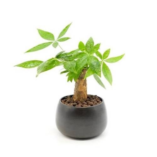 Tuổi Dần hợp cây gì? Người tuổi Dần nên trồng cây gì để năm mới được bình an, may mắn-1