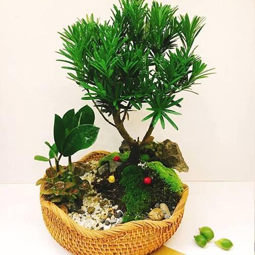 Tuổi Dần hợp cây gì? Người tuổi Dần nên trồng cây gì để năm mới được bình an, may mắn-2