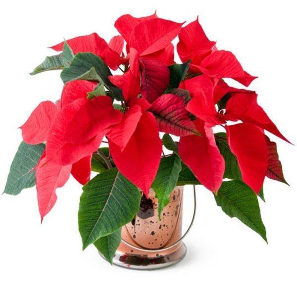 Tuổi Dần hợp cây gì? Người tuổi Dần nên trồng cây gì để năm mới được bình an, may mắn-8