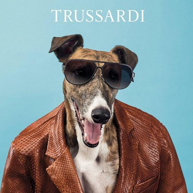 Gucci thay ảnh đại diện, chó mặc quần áo và loạt quảng cáo độc lạ-5