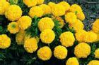 Cúng ngày 23 tháng Chạp tránh tuyệt đối loại hoa này kẻo cả năm mất lộc