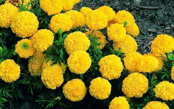 Cúng ngày 23 tháng Chạp tránh tuyệt đối loại hoa này kẻo cả năm mất lộc-2