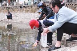 Bi hài cá chép vừa thả xuống hồ, chưa kịp đưa ông Táo chầu Trời đã... gặp nạn