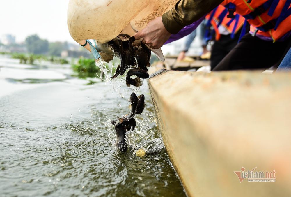 Né quân chích điện, thuê ghe ra giữa sông thả tạ cá ngày ông Công ông Táo-10