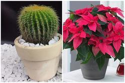 Đầu năm trồng cây lấy lộc chớ chọn 3 loại này kẻo mất vui cả năm