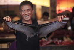 Loạt nhà hàng Indonesia ngừng bán món dơi hầm vì virus corona