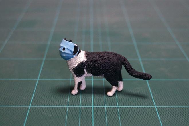 Ảnh mèo đeo khẩu trang giữa dịch virus corona gây bão mạng-3