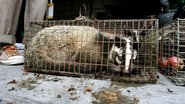 Ăn thịt thú hoang dã - thói quen nghìn năm làm hại người Trung Quốc-1