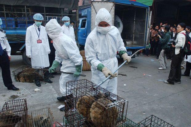 Ăn thịt thú hoang dã - thói quen nghìn năm làm hại người Trung Quốc-2