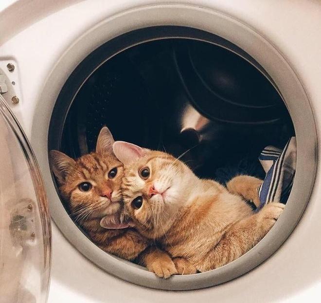 Dân mạng bắt trend sống ảo với nồi cơm điện, máy giặt, giấy bạc-4