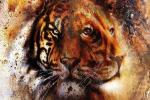 Thấy sư tử hay hổ trước tiên? Câu trả lời sẽ phản ánh tính cách của bạn!