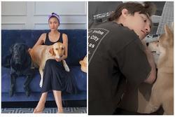 Hà Tăng và Sơn Tùng đọ vẻ đáng yêu khi cùng đăng hình với thú cưng