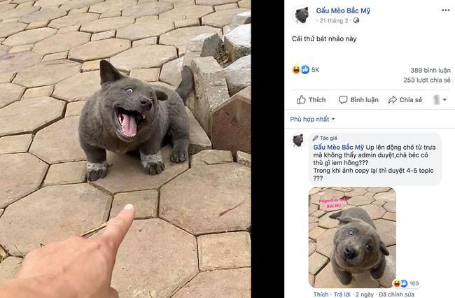 Chú chó hot nhất Facebook gần 1 tuần qua, lập fanpage 4 ngày thu về 32 ngàn lượt thích, ai nhìn cũng muốn nuôi!-8