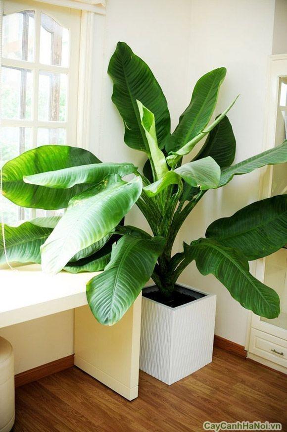 5 loại cây nghe tên đã thấy giàu đặt trong phòng khách hút tài lộc cực đỉnh-3