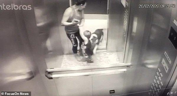 Clip: Con chó pitbull lừng lững lao vào thang máy tấn công em bé 18 tháng, bảo mẫu không kịp trở tay-2