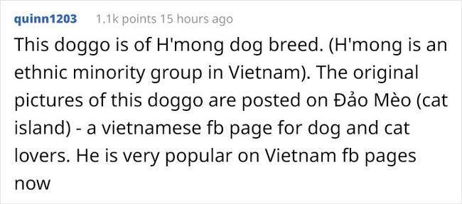 TIN ĐƯỢC KHÔNG: Trong 5 ngày, chú chó Nguyễn Văn Dúi đã trở thành hiện tượng mạng toàn cầu-5