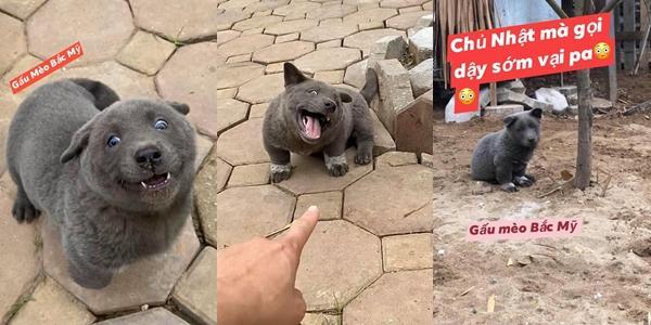 TIN ĐƯỢC KHÔNG: Trong 5 ngày, chú chó Nguyễn Văn Dúi đã trở thành hiện tượng mạng toàn cầu-1