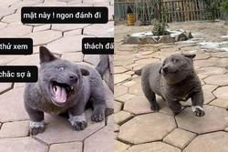 TIN ĐƯỢC KHÔNG: Trong 5 ngày, chú chó Nguyễn Văn Dúi đã trở thành hiện tượng mạng toàn cầu