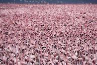 Hồ nước độc nuôi sống hàng triệu hồng hạc