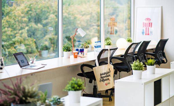 Không chỉ để trang trí, đặt cây cảnh trên bàn làm việc còn có những lợi ích tuyệt vời này-4