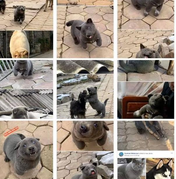 Cuộc sống chảnh cún của chú chó Nguyễn Văn Dúi sau gần 1 tháng nổi tiếng khắp cõi mạng-5