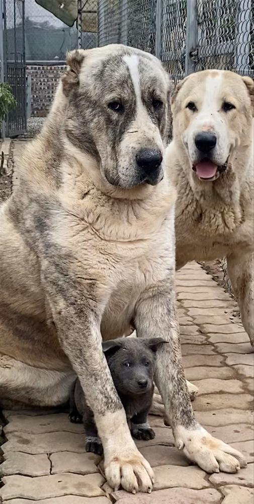 Những điều chưa kể về chú chó hot nhất MXH Nguyễn Văn Dúi: Nghịch ngợm và thích cà khịa đồng loại-7