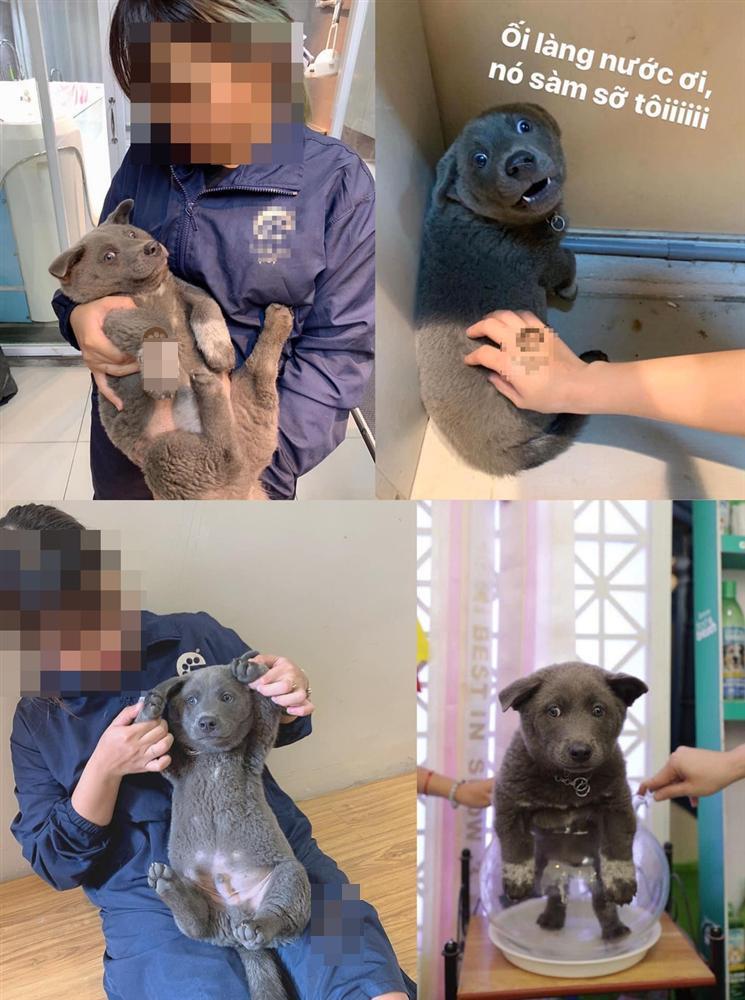 Những điều chưa kể về chú chó hot nhất MXH Nguyễn Văn Dúi: Nghịch ngợm và thích cà khịa đồng loại-10