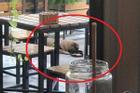 Cô gái vào nhà hàng dùng đĩa phục vụ khách cho chó ăn gây bức xúc