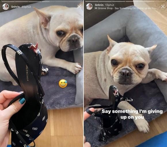 Tố cún cưng của bạn trai gặm đôi giày 19 triệu, Linh Rin bị soi ngay chuyện tình cảm với em chồng Hà Tăng-1