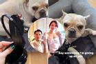 Tố cún cưng của bạn trai gặm đôi giày 19 triệu, Linh Rin bị soi ngay chuyện tình cảm với em chồng Hà Tăng