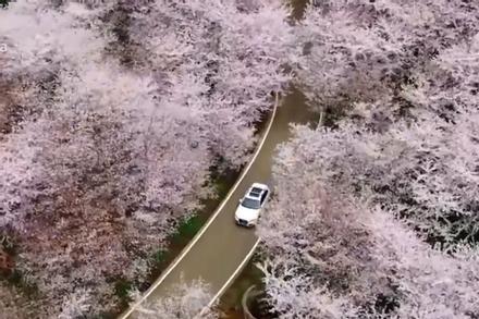 Mùa Xuân đến sớm tại Trung Quốc khi đỉnh dịch đi qua