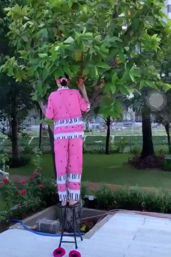 Ngọc Trinh vắt vẻo trèo cây hái mận, ai nấy thót tim vì sợ mỹ nhân rơi tự do-4
