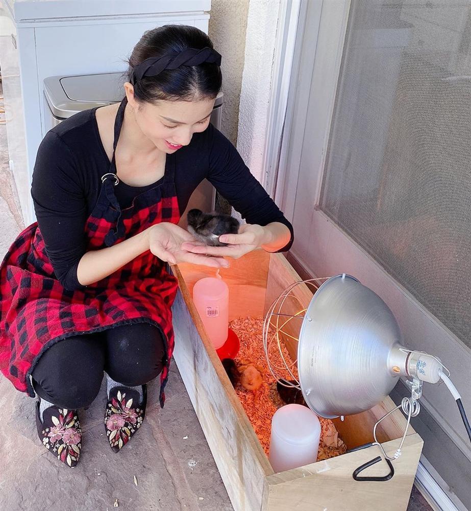 Hoa hậu Phạm Hương trồng rau, nuôi gà trên đất Mỹ-2