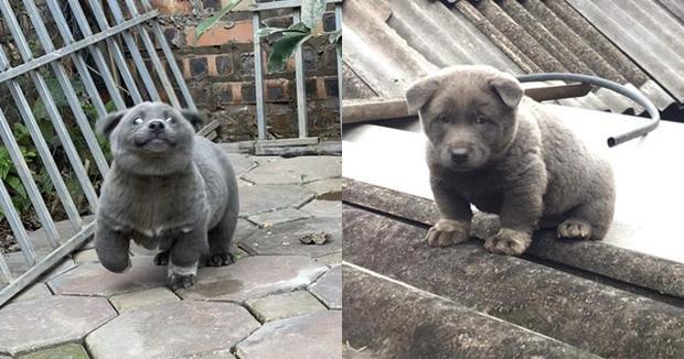 Sự thật về hình ảnh mẹ chú chó idol Nguyễn Văn Dúi, dân tình còn ngỡ ngàng vì giống nhau từ lông đến biểu cảm-1