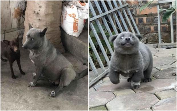 Sự thật về hình ảnh mẹ chú chó idol Nguyễn Văn Dúi, dân tình còn ngỡ ngàng vì giống nhau từ lông đến biểu cảm-3