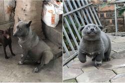 Sự thật về hình ảnh mẹ chú chó idol Nguyễn Văn Dúi, dân tình còn ngỡ ngàng vì giống nhau từ lông đến biểu cảm