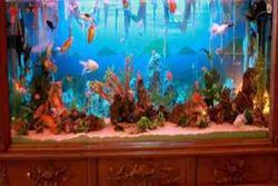 Người mệnh này trong phong thủy tuyệt đối tránh đặt bể cá cảnh trong nhà