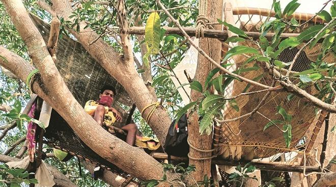 Nhóm người Ấn Độ tự cách ly trên cây để tránh lây virus-1