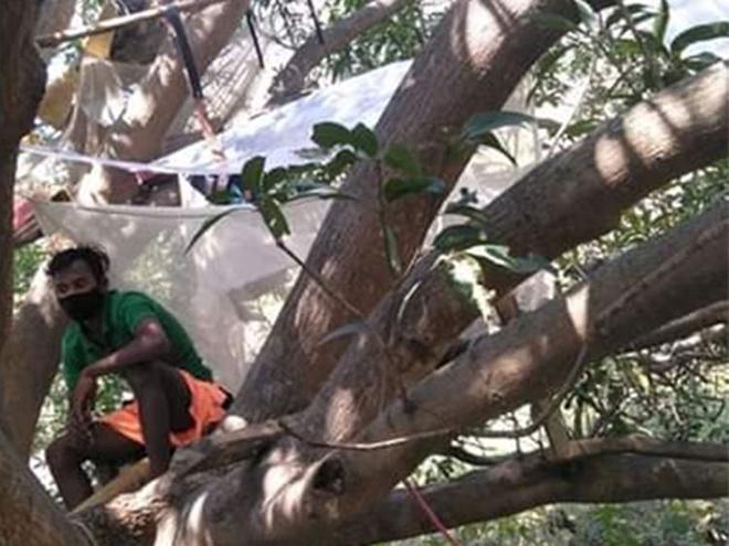 Nhóm người Ấn Độ tự cách ly trên cây để tránh lây virus-2