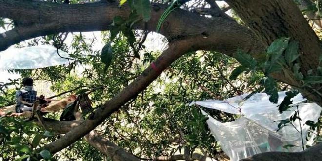 Nhóm người Ấn Độ tự cách ly trên cây để tránh lây virus-3
