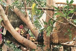 Nhóm người Ấn Độ tự cách ly trên cây để tránh lây virus
