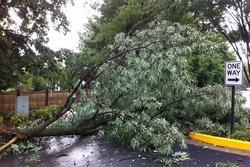 Bất ngờ bị hàng xóm chặt cây, chặn cửa nhà vì nghi ngờ nhiễm virus