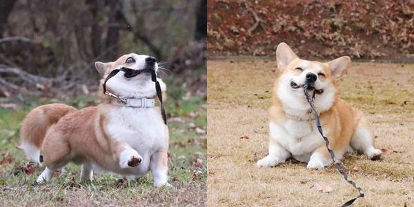 Chú chó nổi như cồn vì diện mạo chuẩn tướng phu thê với idol Nguyễn Văn Dúi-4
