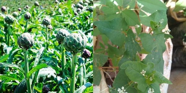 Hết quần áo đến hạt giống khác xa ảnh minh hoạ: Hội chủ shop không có tâm là nguồn cảm hứng cho ngày Cá tháng Tư-3