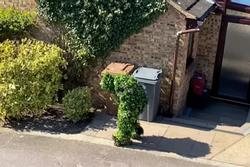 Trốn cách ly Covid-19, người đàn ông Anh hóa trang thành bụi cây để lẻn ra ngoài chơi