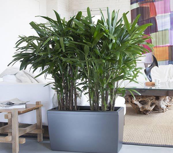 6 loại cây hút bức xạ cực tốt, làm việc tại nhà cũng nên mua đặt bàn ngay-4