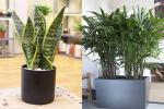 6 loại cây hút bức xạ cực tốt, làm việc tại nhà cũng nên mua đặt bàn ngay